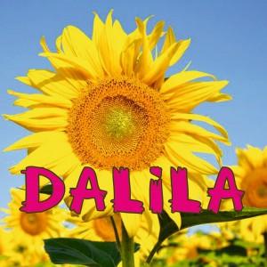 DALILA 1 (Custom)